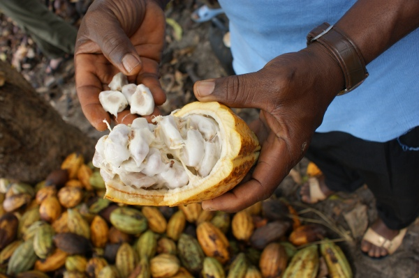 Cocoa pods & beans in human hands.