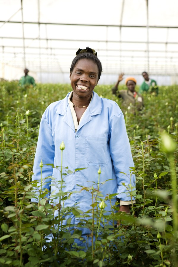 Female worker among roses in greenhouse.