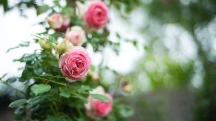 floristismo 1